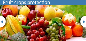 5.fruit-crop1-resized-301×144
